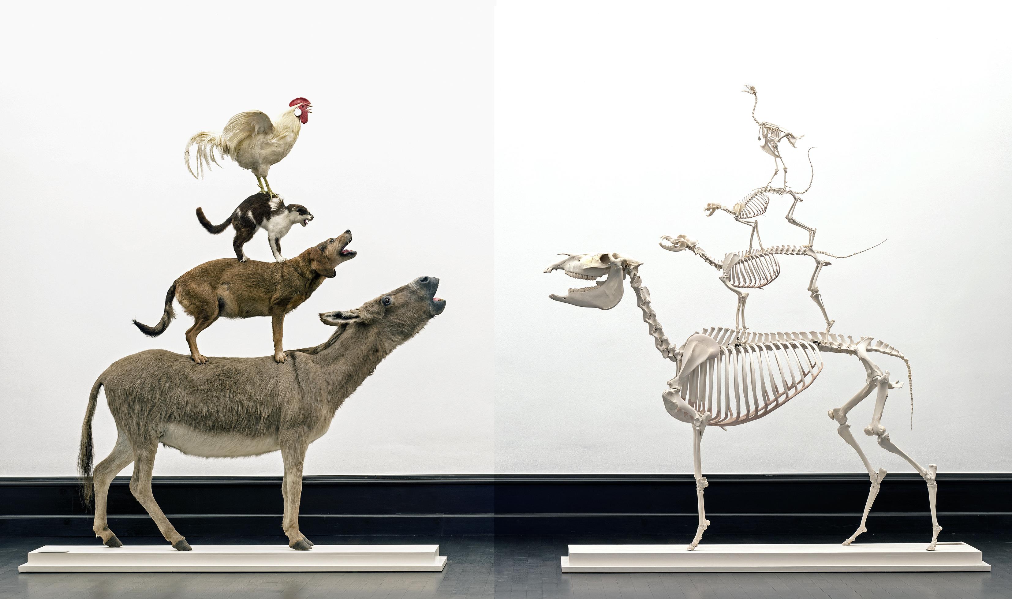 Maurizio Cattelan, Love Saves Life, 1995 und Love Lasts Forever, 1998 Tierpräparate, Tierskelette Kunsthalle Bremen – Der Kunstverein in Bremen © Maurizio Cattelan